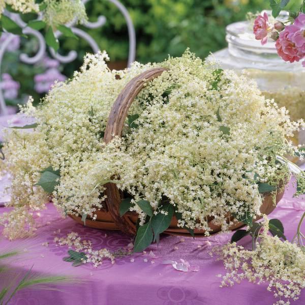 Delikatne jak mgiełka dekoracje z kwiatu czarnego bzu