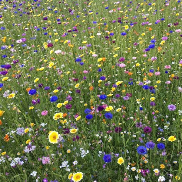 Łąka kwietna zamiast trawnika – dlaczego warto?