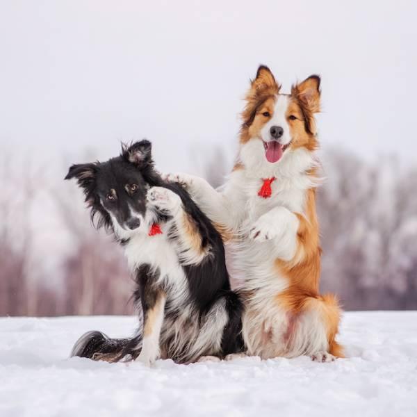 pies na dworze