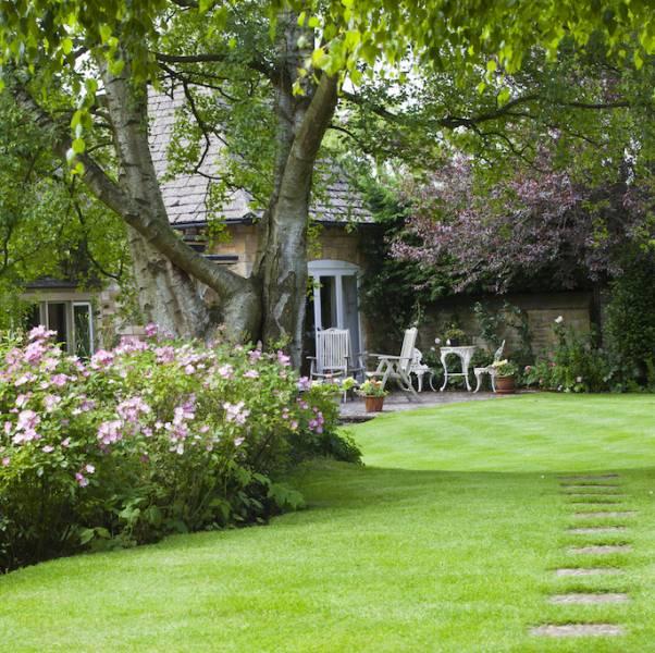 Piękne rośliny przed twoim domem