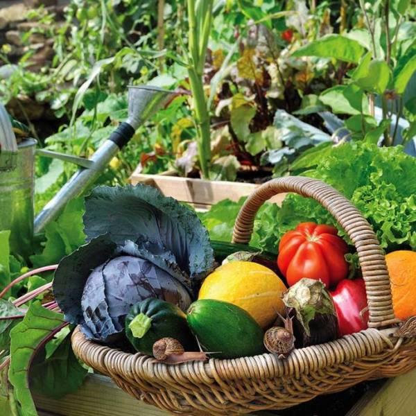 ogródek warzywny w lipcu