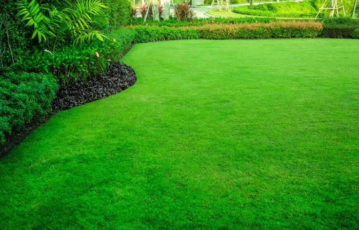 jak zadbać o trawnik na wiosnę