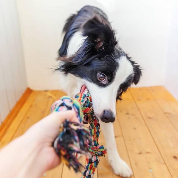 Grunt to fajna zabawa, czyli jak zrobić samemu zabawki dla psa