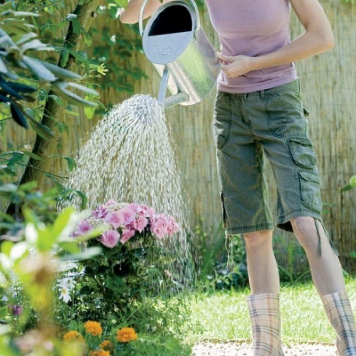 ABC podlewania roślin