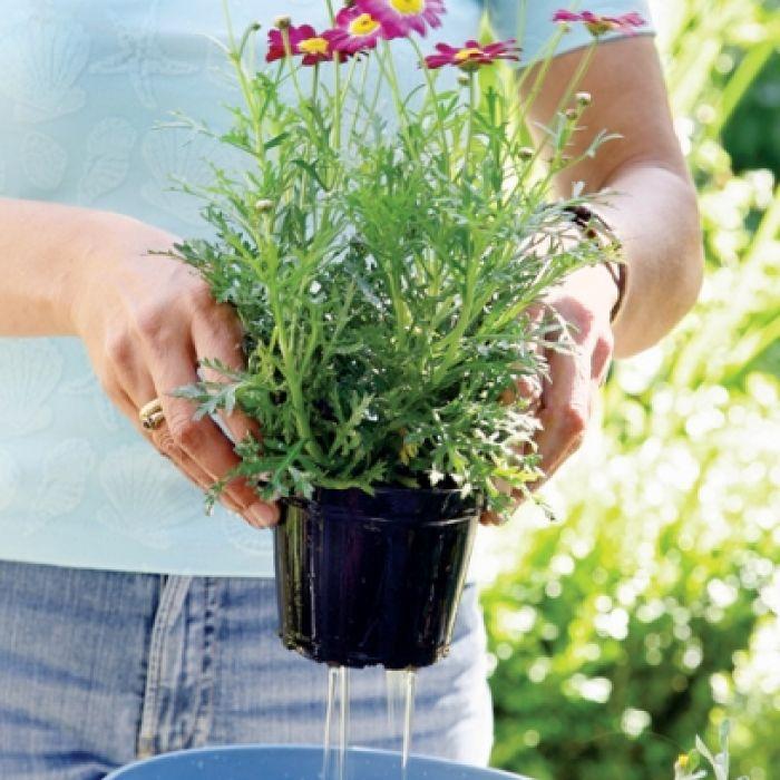 Wykąp kwiatki