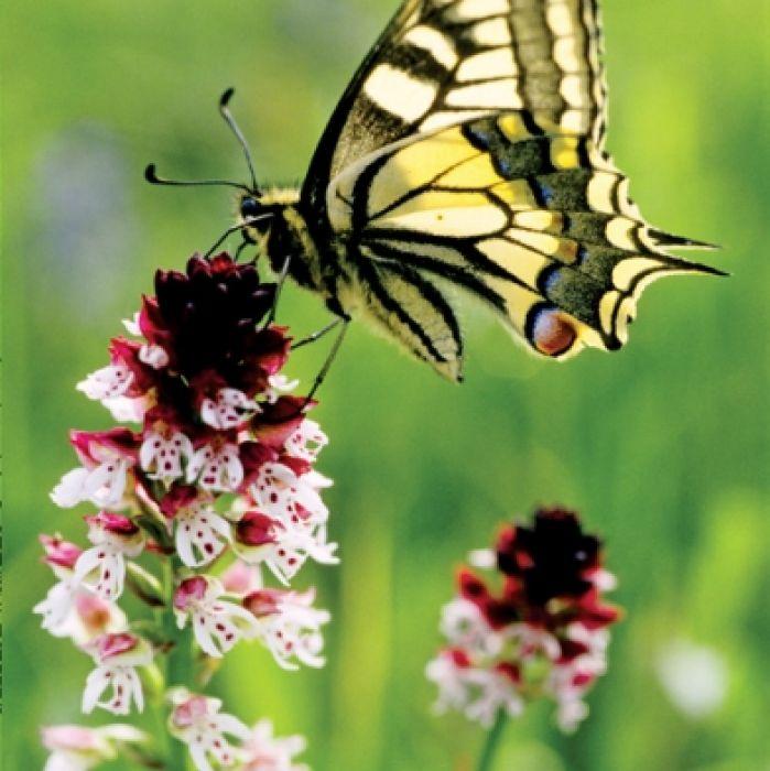 Motyli raj