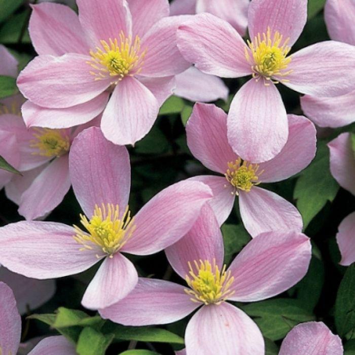 Burza kwiatów i zapachów