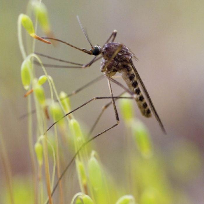 Komarza uczta
