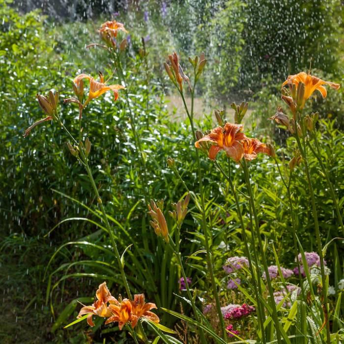 Jak skuteczne i oszczędnie nawadniać ogród?