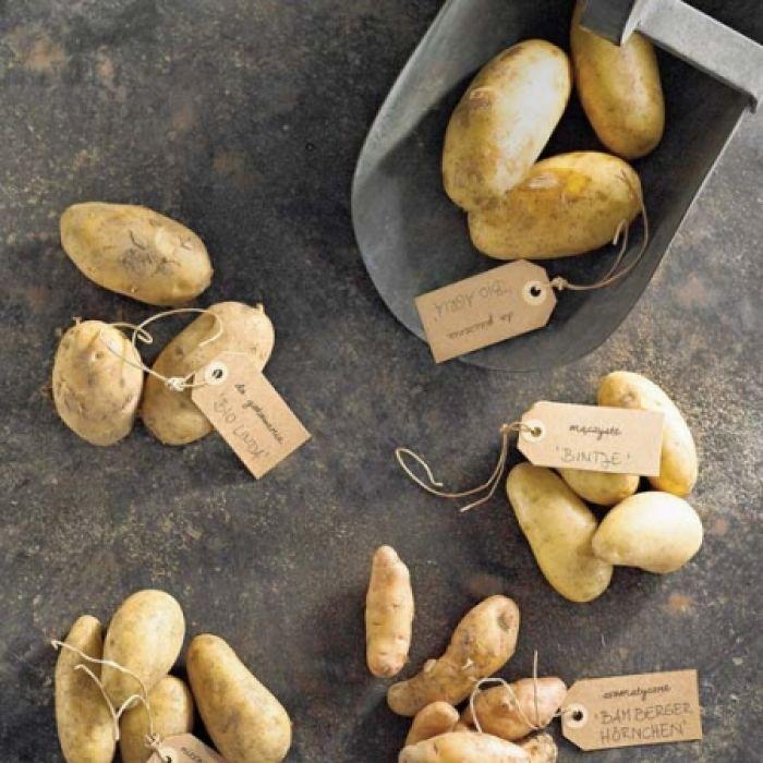 Ziemniaki nie są nudne