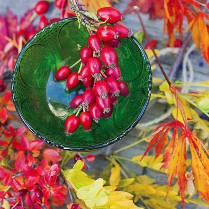 dekoracje z liści i dzikiej róży