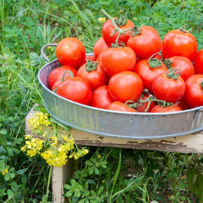 Masz ochotę owoce i warzywa od rolnika? Zbierz je sam!