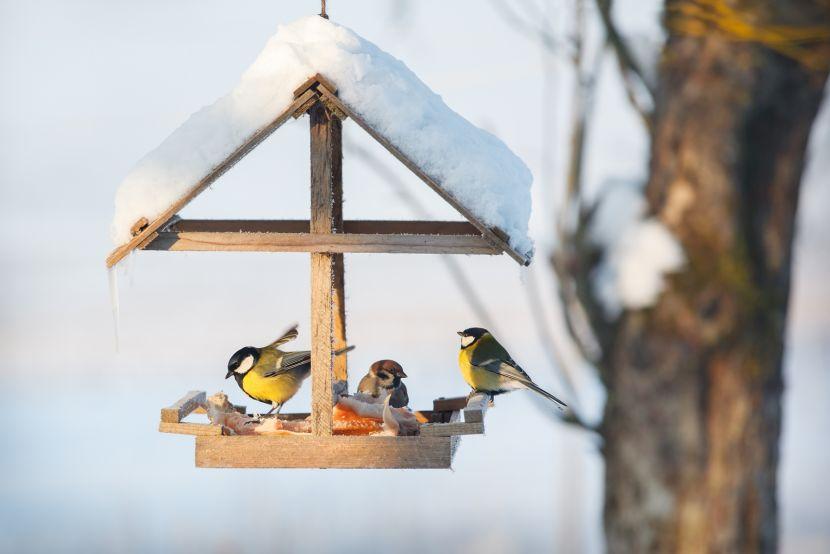 Dokarmianie ptaków zimą – 5 rzeczy, które warto wiedzieć   Werandacountry.pl